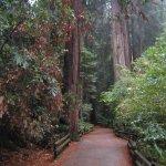 Redwood Pathway