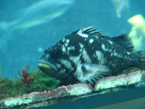 Monterey Fish