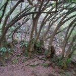 Trees in Tilden